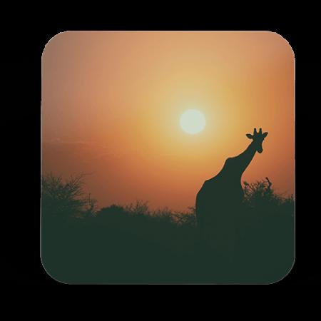 Giraf – 1